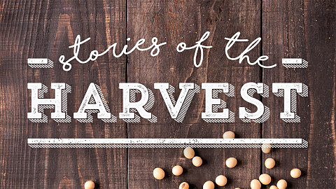 Stories of the Harvest